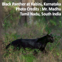 Cultural and Birding Photo Tour, South India