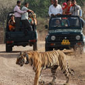 Safari with Taj-Mahal Package3