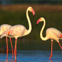Birding & Wildlife Safaris in Gujarat